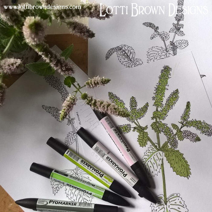 Drawing mint flowers - click to see what this became part of