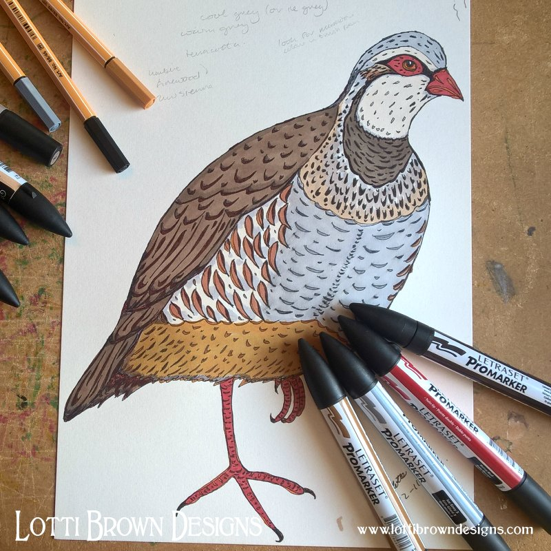 Red-legged Partridge Drawing - click to see what happened to this drawing