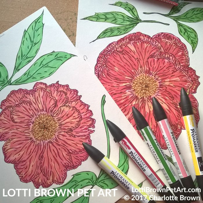 Fully coloured peony drawings