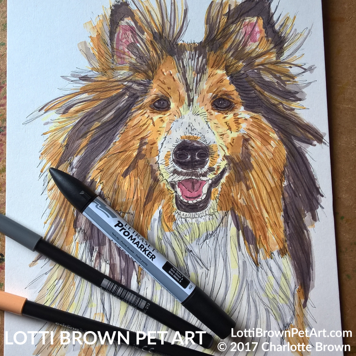 Adding colour to the sheltie drawing
