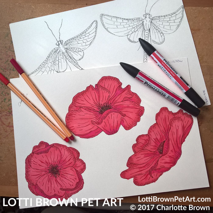 Drawing the flowers