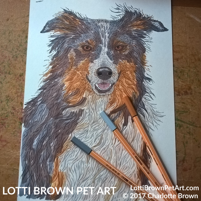 Colouring my border collie drawing