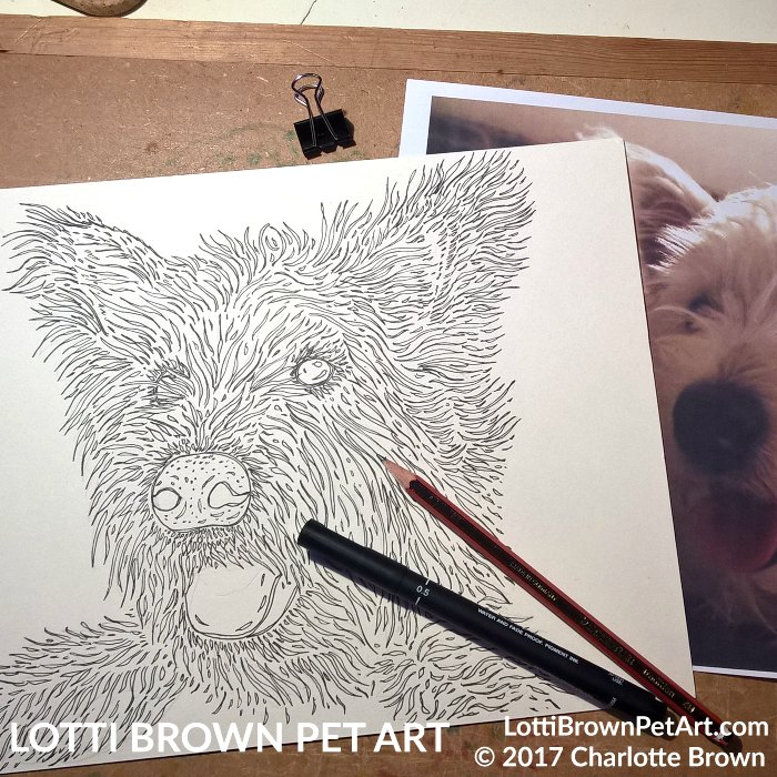 Starting my Westie drawing