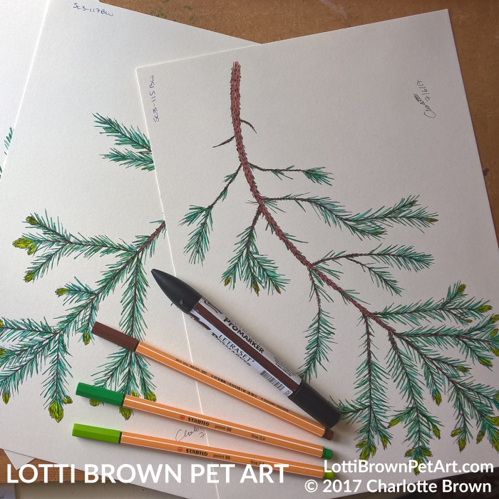 Drawing fir branches
