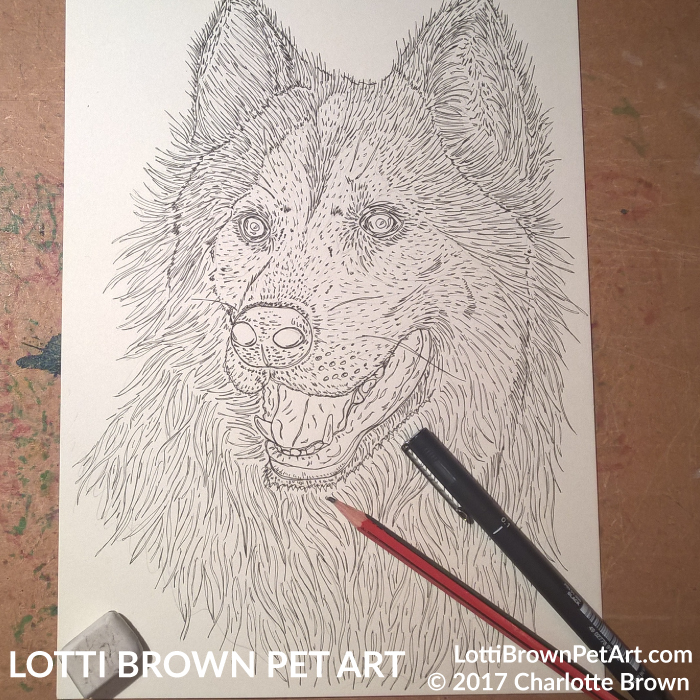 Starting my husky drawing