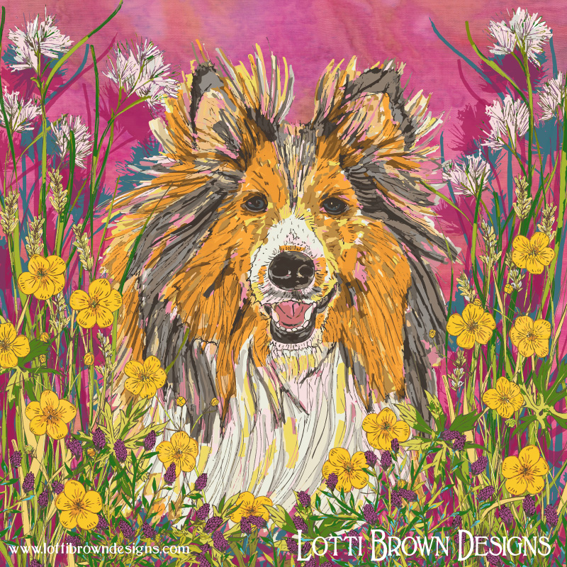 Sheltie in a Shetland Summer Meadow - click image to go behind the scenes