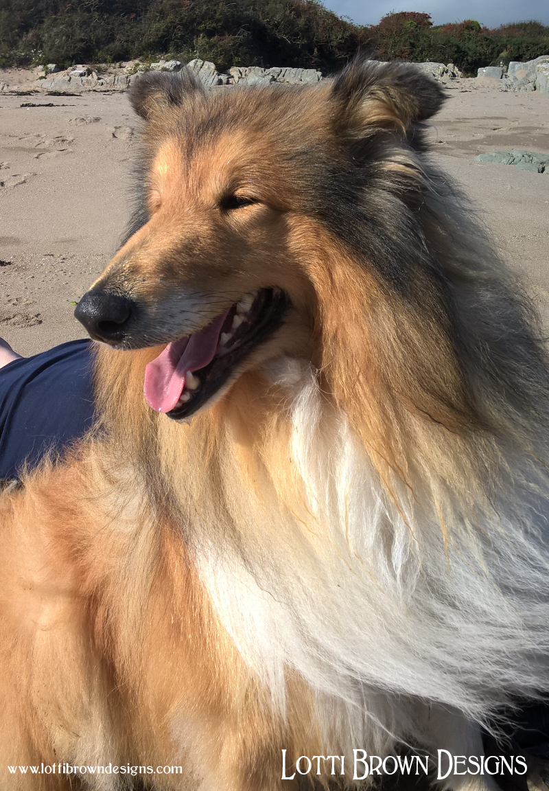 Rough collie - sunny day on the beach