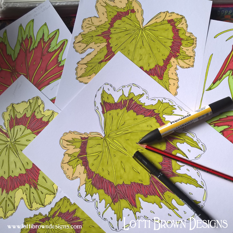 Drawing the coloured geranium leaves and flowers