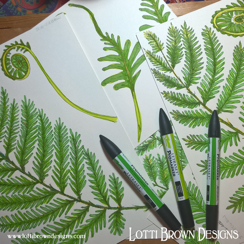 Ferny foliage drawings