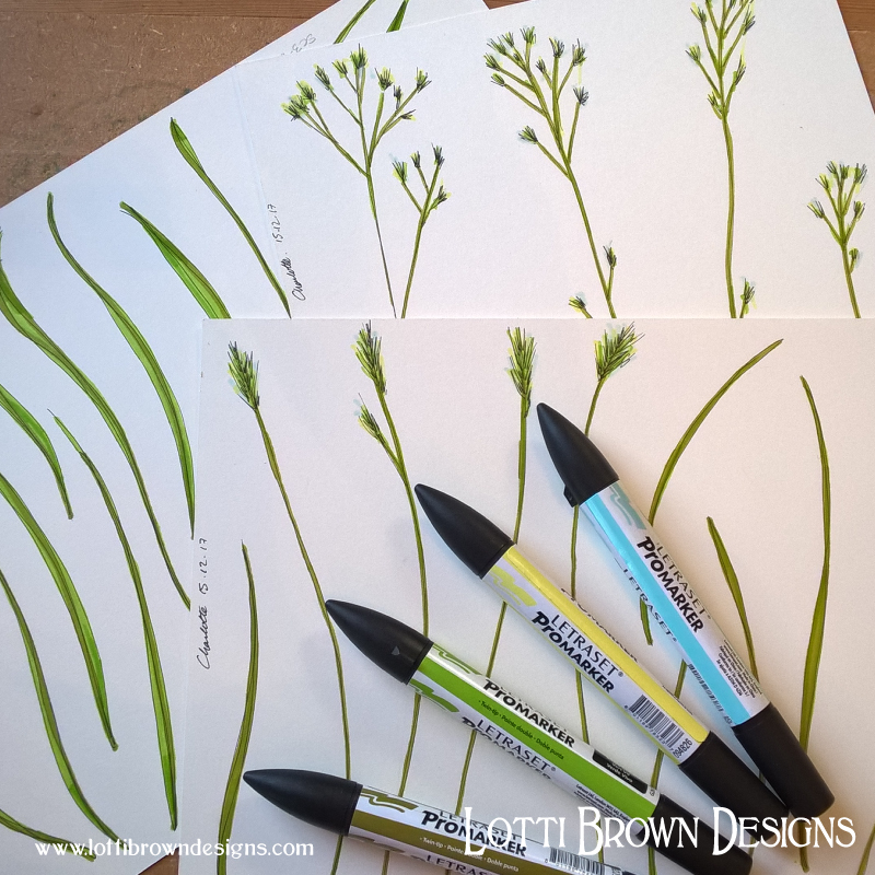 Grasses and foliage drawings