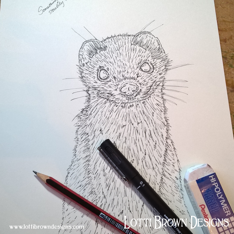 Stoat line drawing