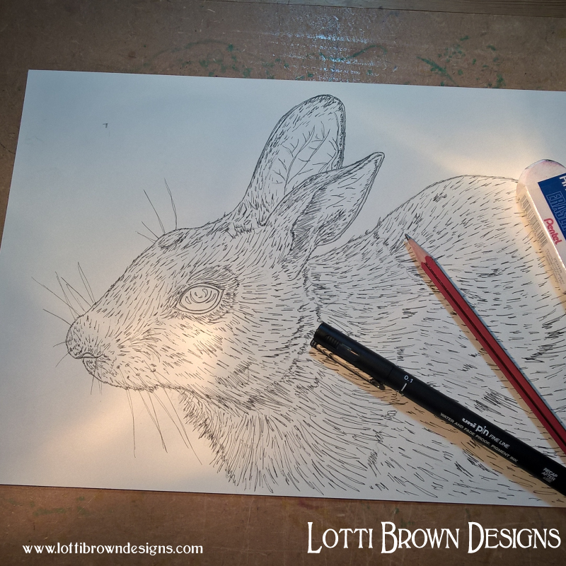 Starting my rabbit drawing