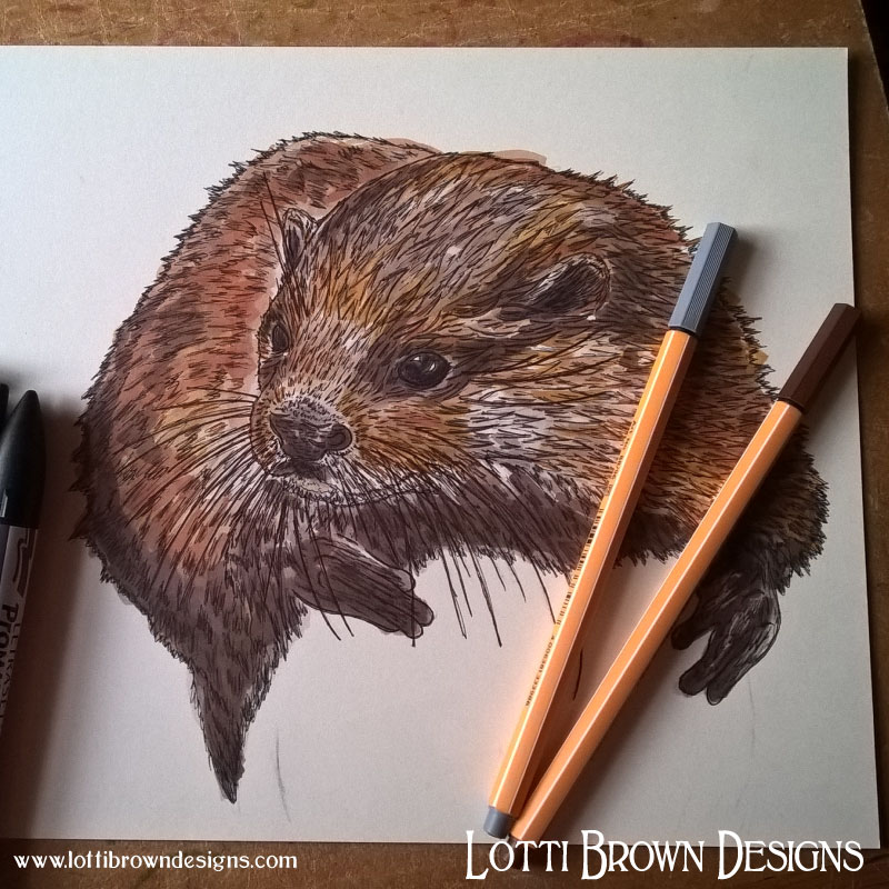 Adding colour to the otter drawing