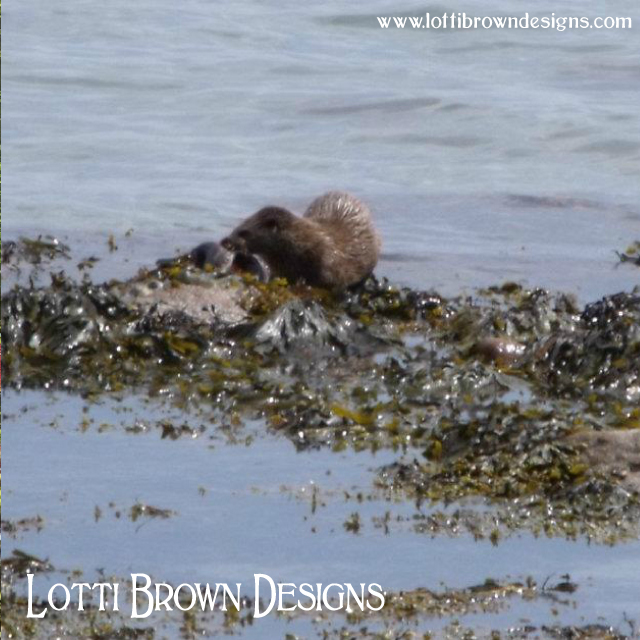 Otter on the seashore in Jura, Scotland
