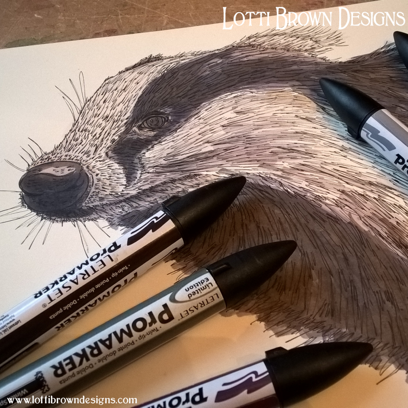 Adding colour to the badger drawing