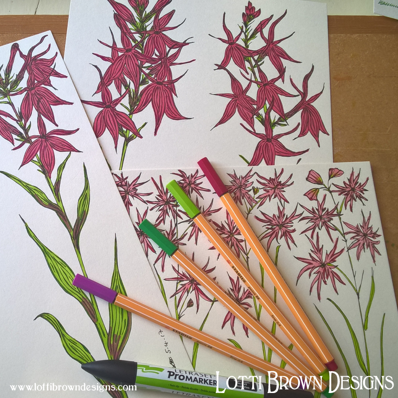 Ragged-Robin flower drawings
