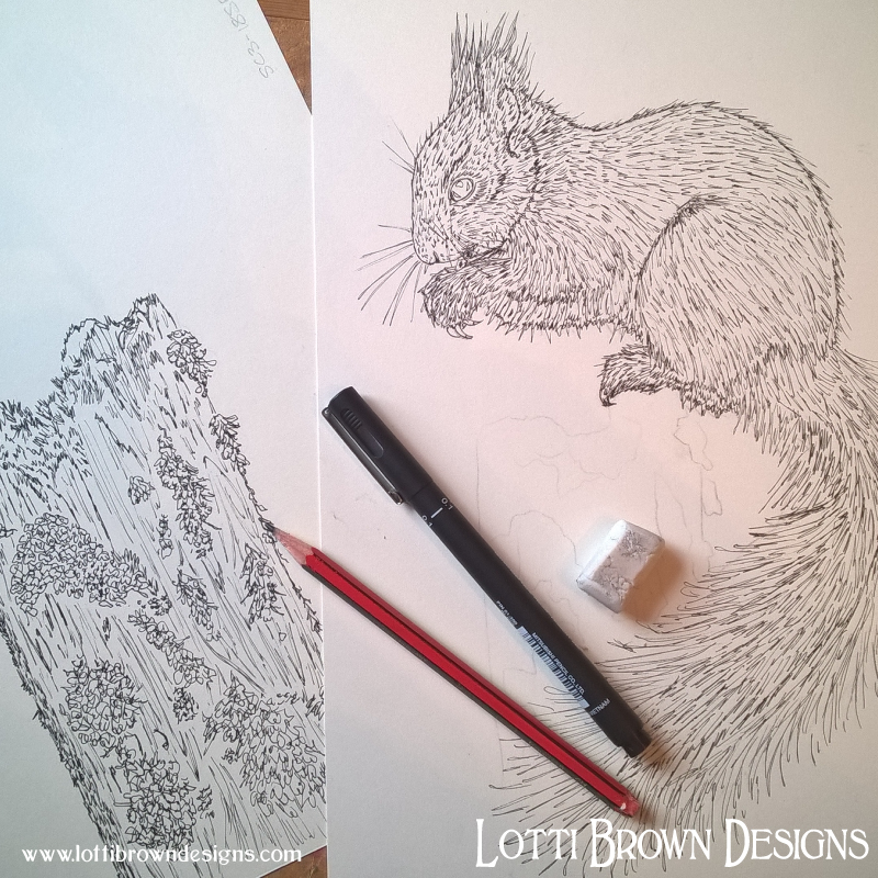 Starting the squirrel drawing