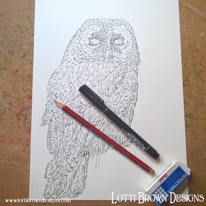 Starting my tawny owl drawing