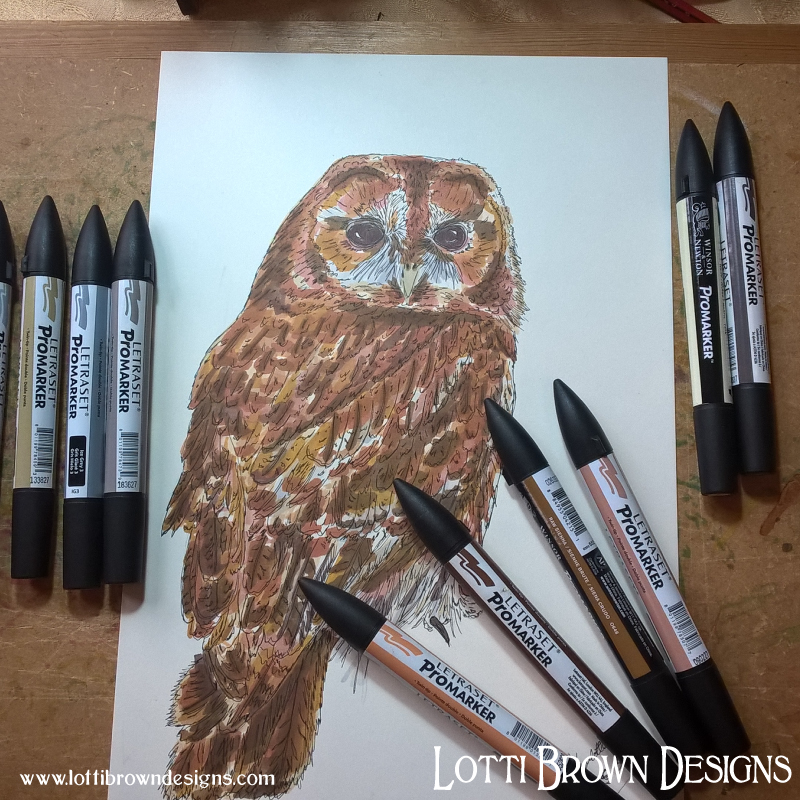 Tawny owl drawing - click image to see the finished artwork in my store