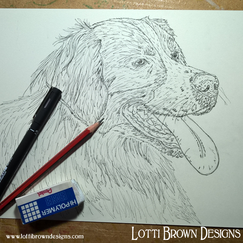 Starting the Bernese dog drawing
