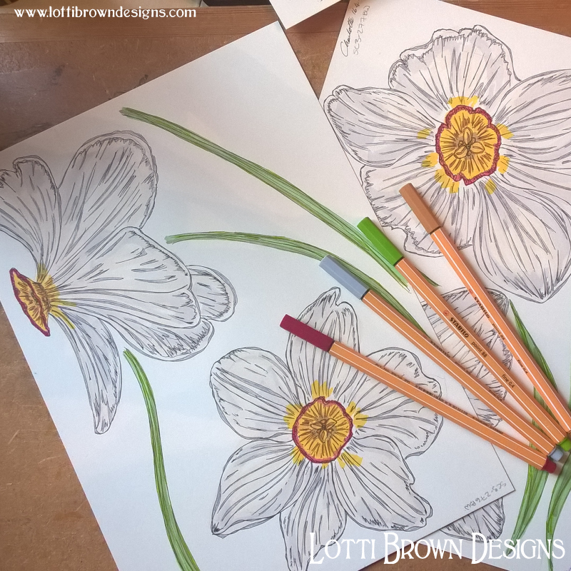 Coloured narcissus drawings