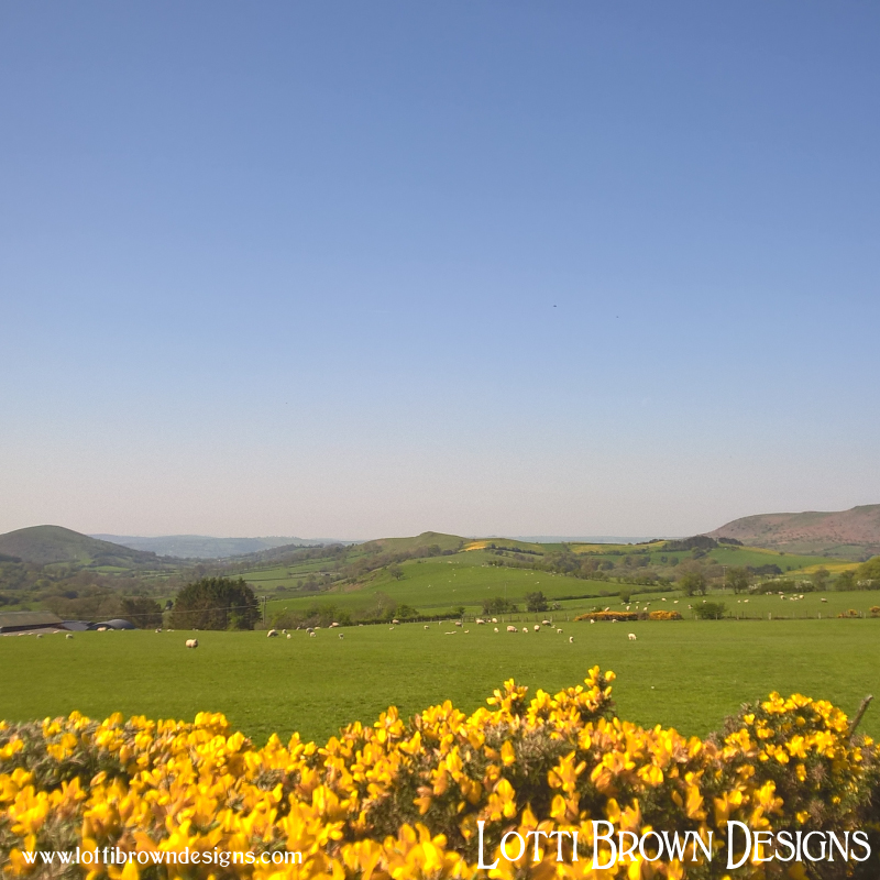 Gorse and Shropshire hills