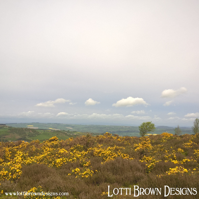 Surrounded by vibrant yellow gorse on the moorland