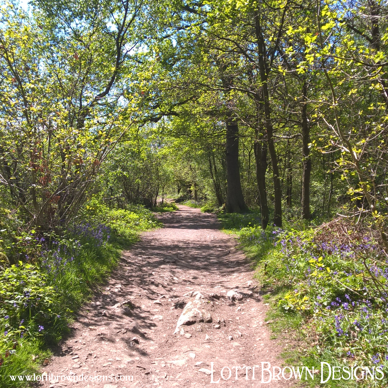 Woodland walk at Haughmond Hill