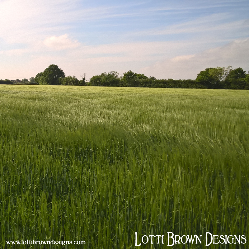 I love to walk in fields of beautiful green barley - green! green! green!