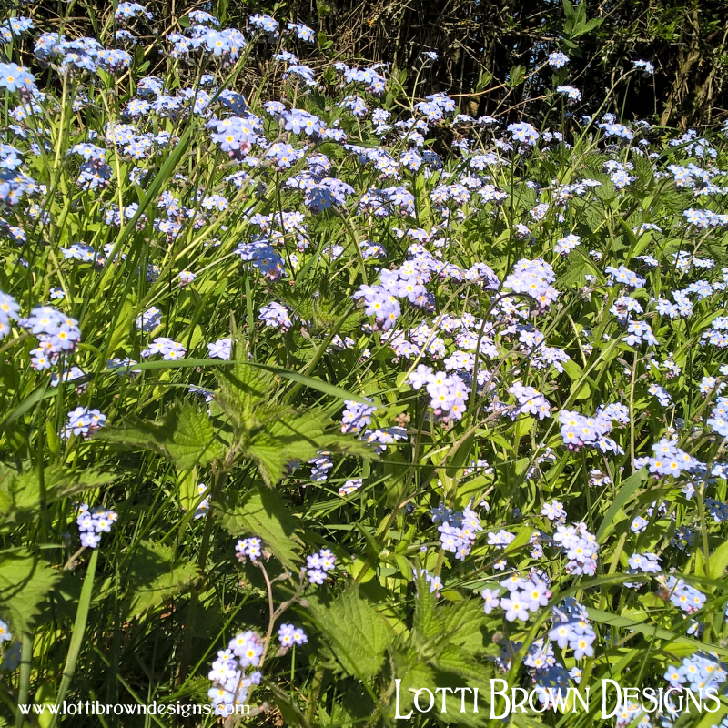 Forget-me-not flowers growing wild in hedgerows and verges