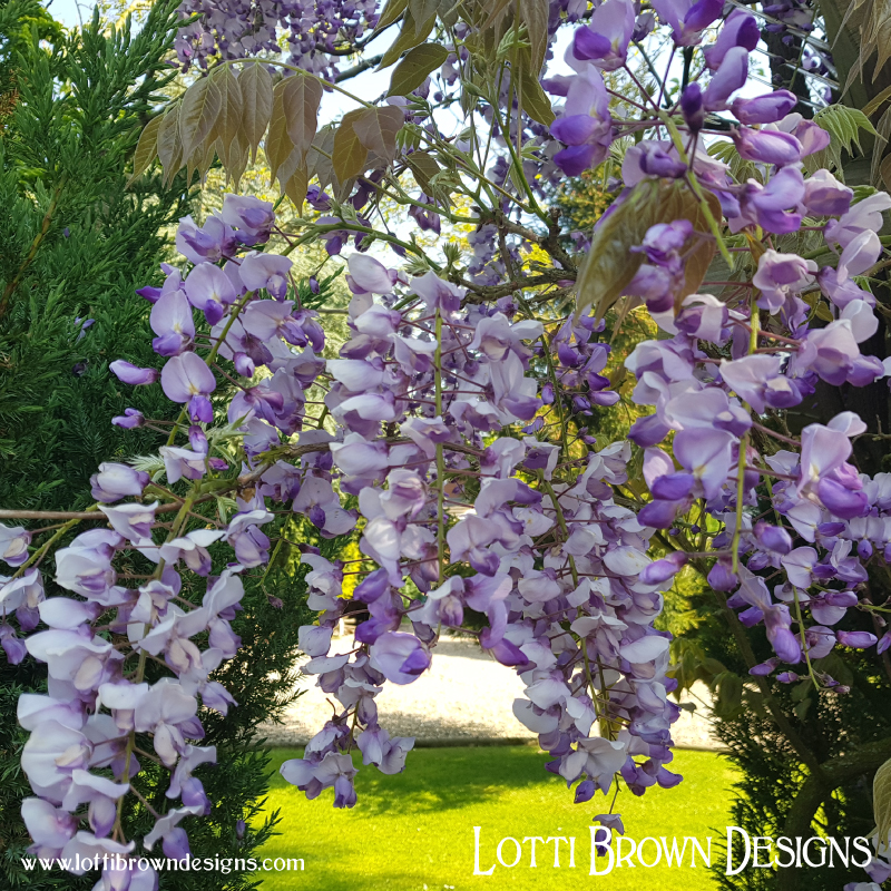 How does the wisteria manage to tumble so elegantly?
