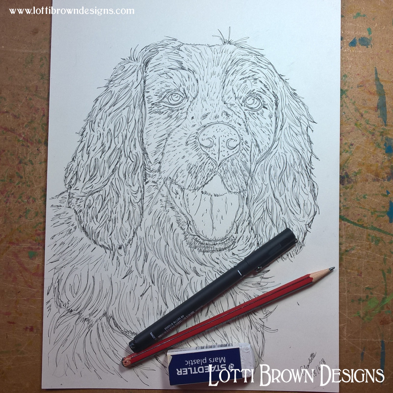 Starting the Spaniel drawing