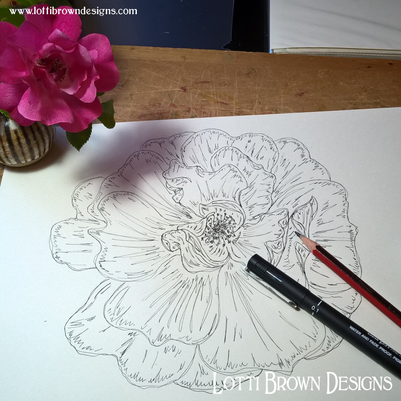 Starting my pink rose drawing