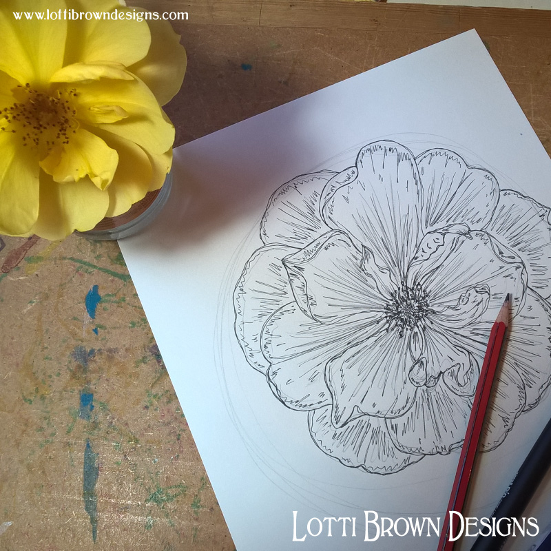 Drawing my yellow rose