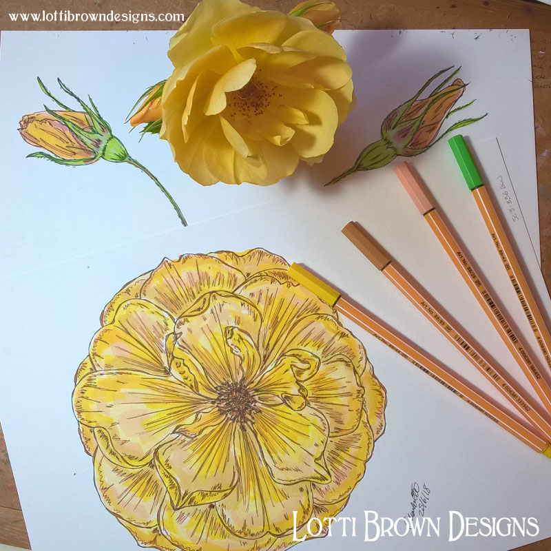 Completed yellow rose drawings