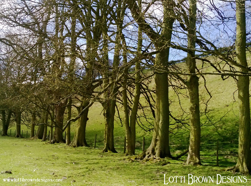 An interesting line of trees along Thixen Dale