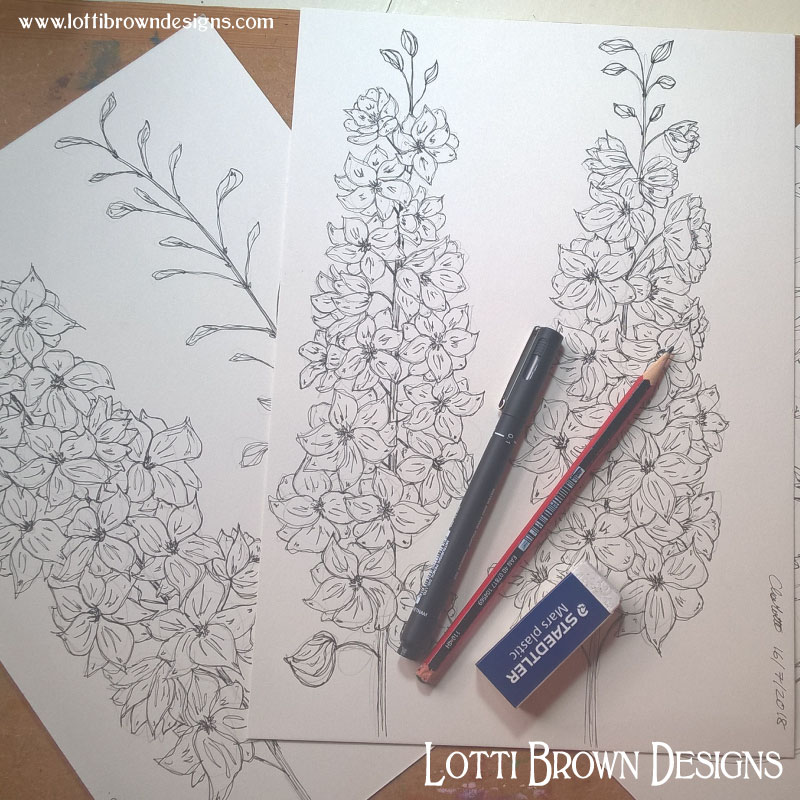 Starting my delphinium drawings