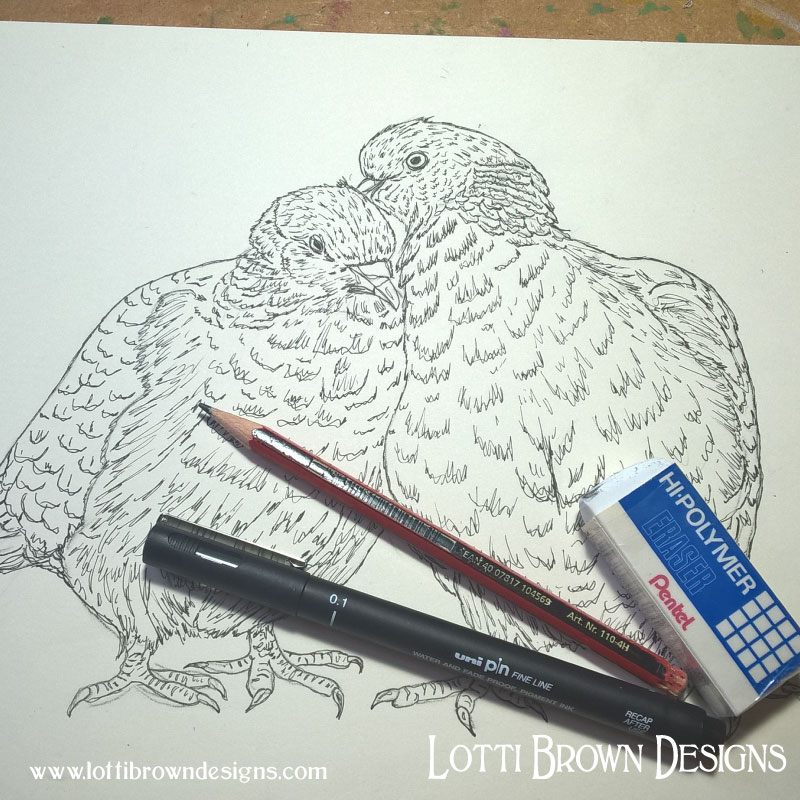 Woodpigeons line drawing