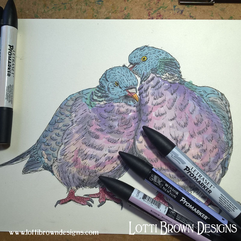 Adding colour to my woodpigeons drawing