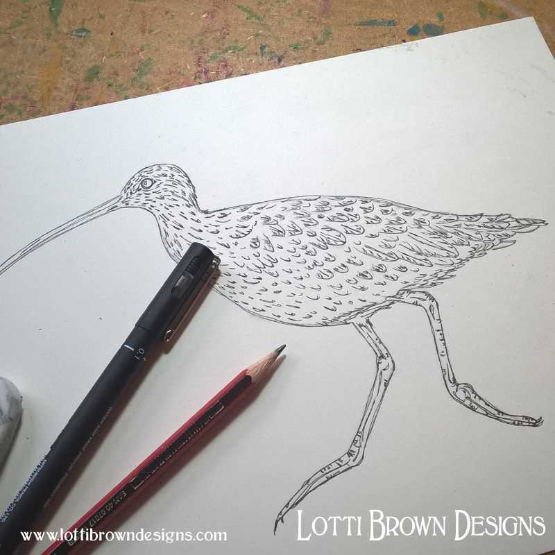 Starting my curlew drawing
