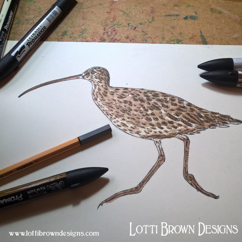 Curlew drawing - click to go behind the scenes of the artwork