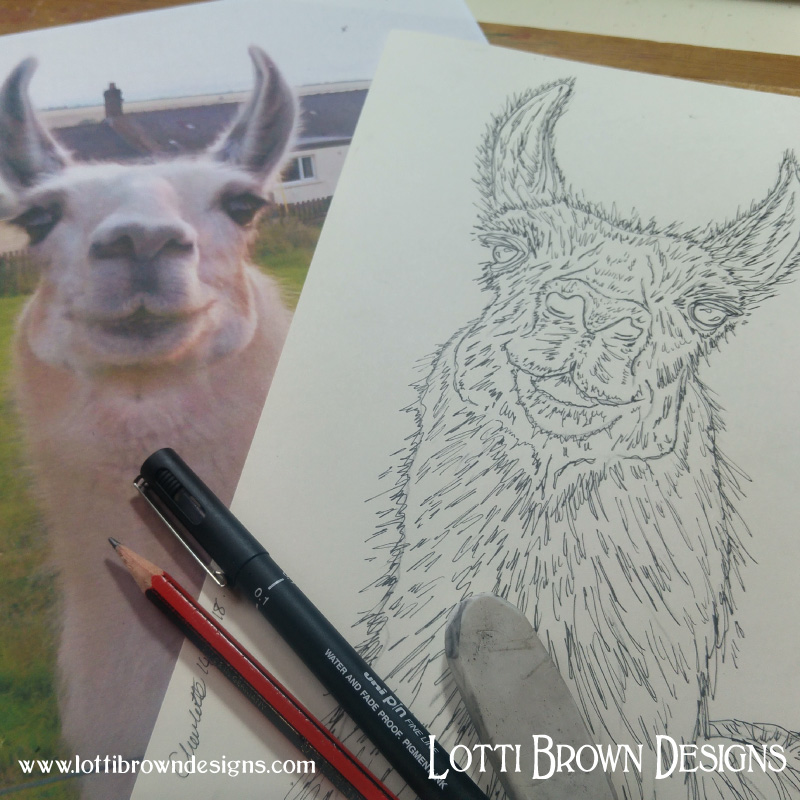 Starting my llama drawing