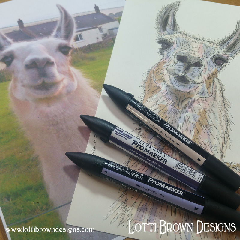 Llama drawing - click to go behind the scenes