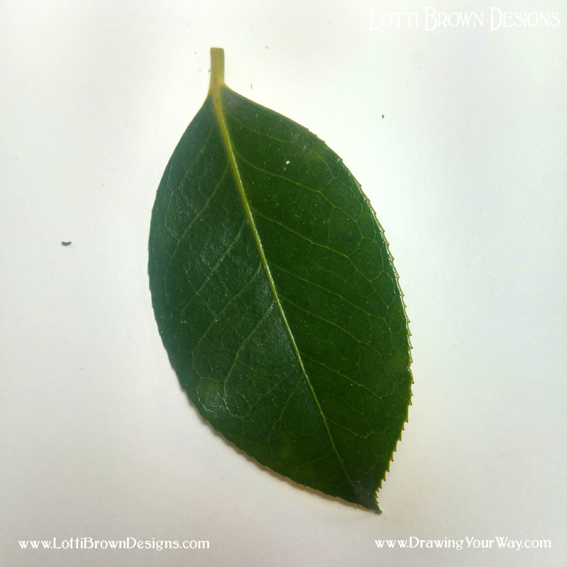 Oval-shaped leaf - click to get the image to draw