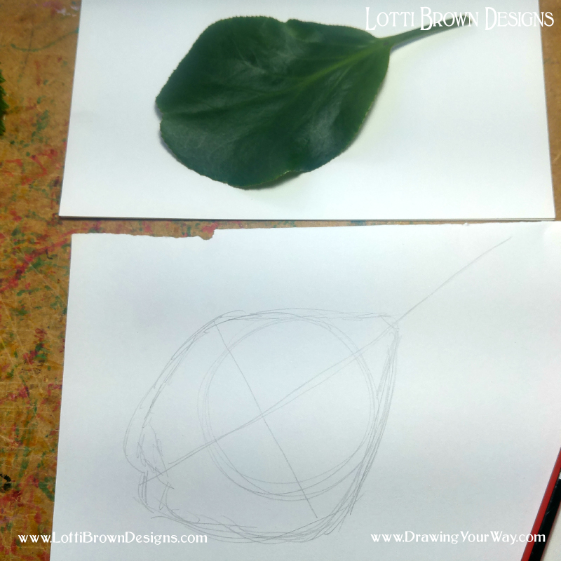 Think about the shape of the leaf and how it relates to the circle