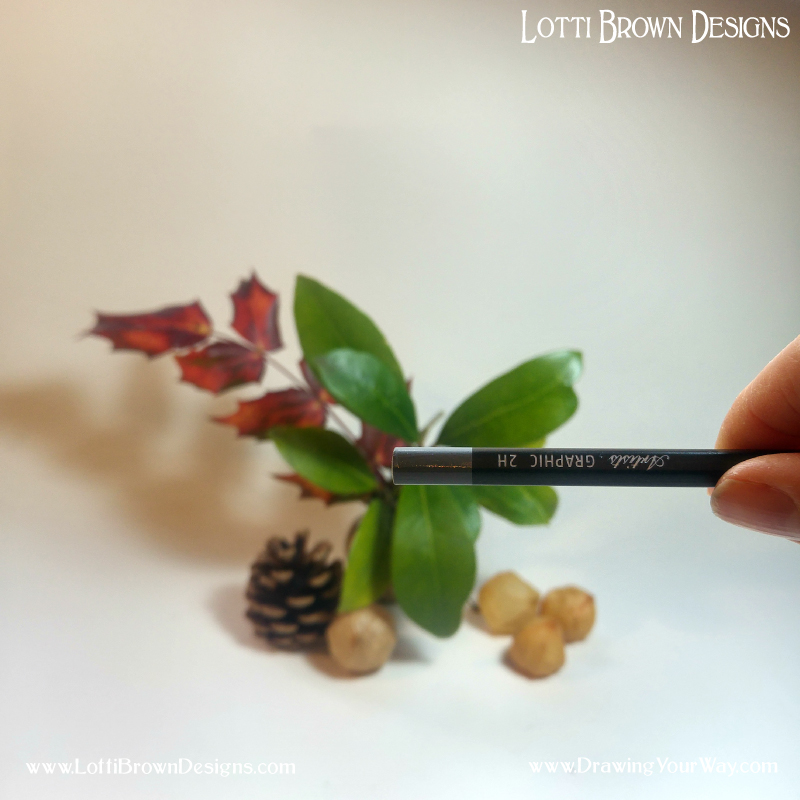 Holding a pencil horizontally helps us to work out the angles of the leaves in comparison to a horizontal line.