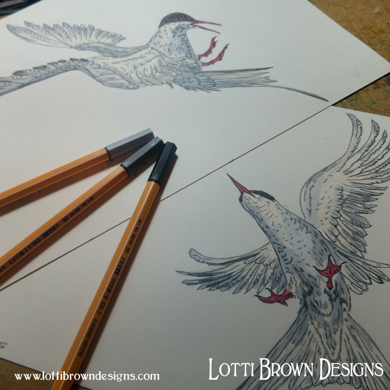 Arctic Terns Drawings - click to see how the drawings became the finished artwork