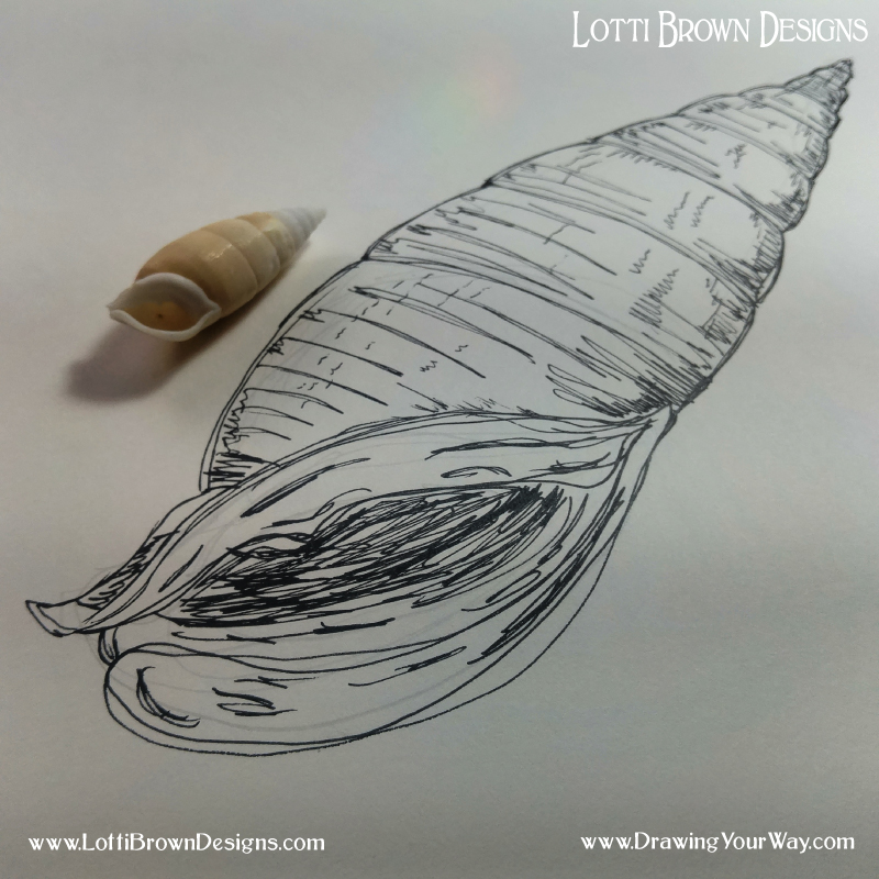 My shell drawing - simple sketch.