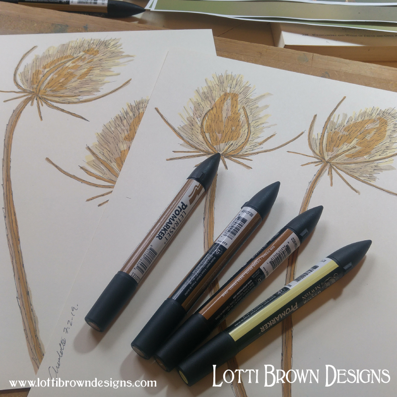 Adding colour to the teasel drawings