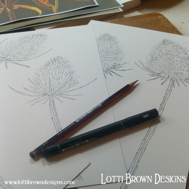 Starting the teasel drawings